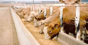 hayvancılık sektörü