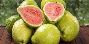 guava yetiştirmek